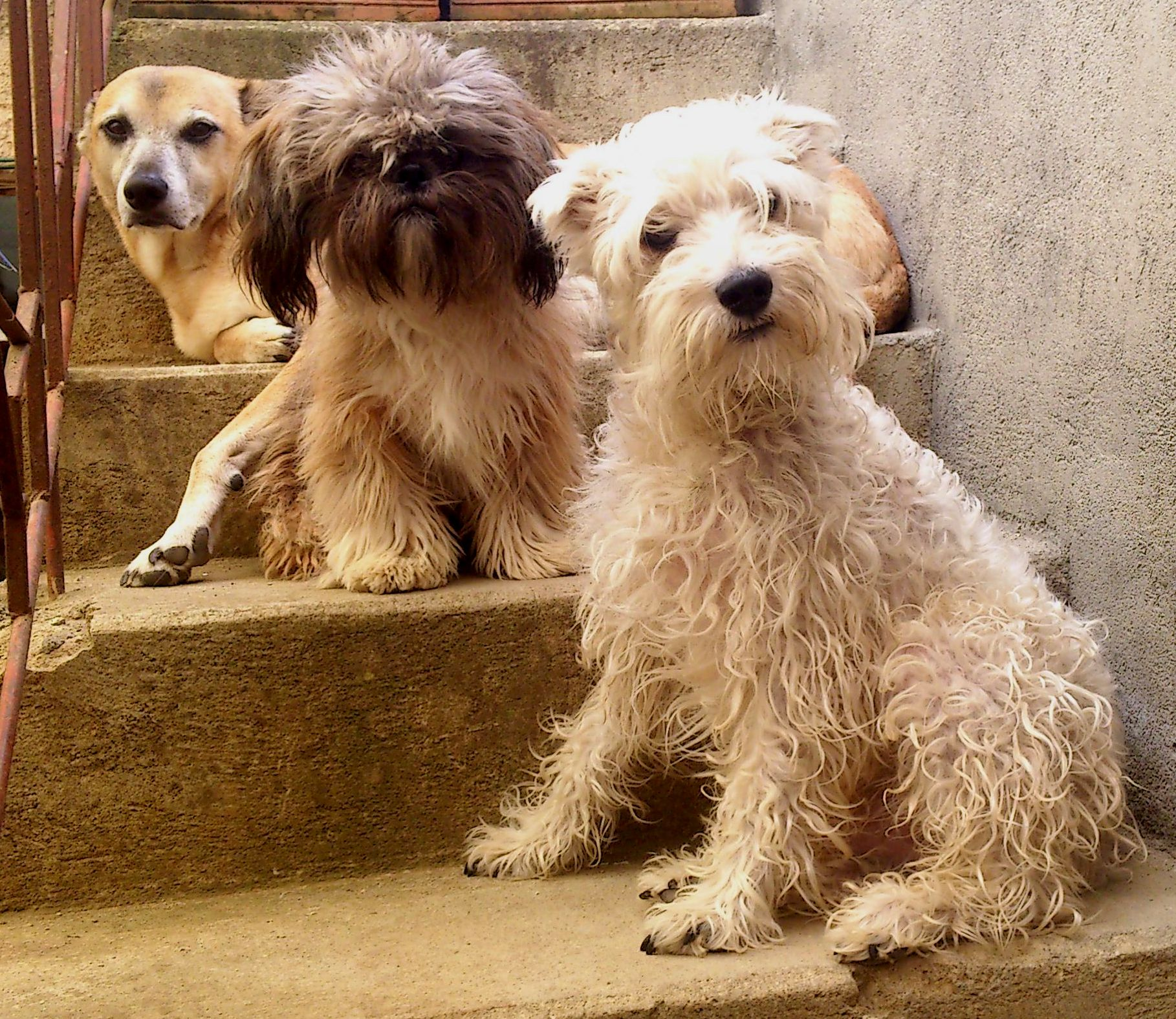 Oddie, Yupi, Firulais - My pets, my family.