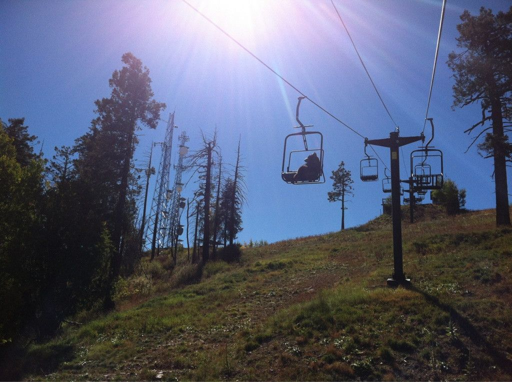 The Shirk Report Volume 185 Ski lift, Best funny