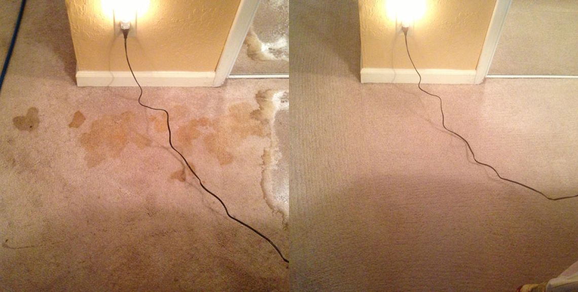 How To Steam Clean Pet Urine In Carpet Feels Free To Follow Us In 2020 Cleaning Pet Urine Carpet Cleaning Pet Stains How To Clean Carpet