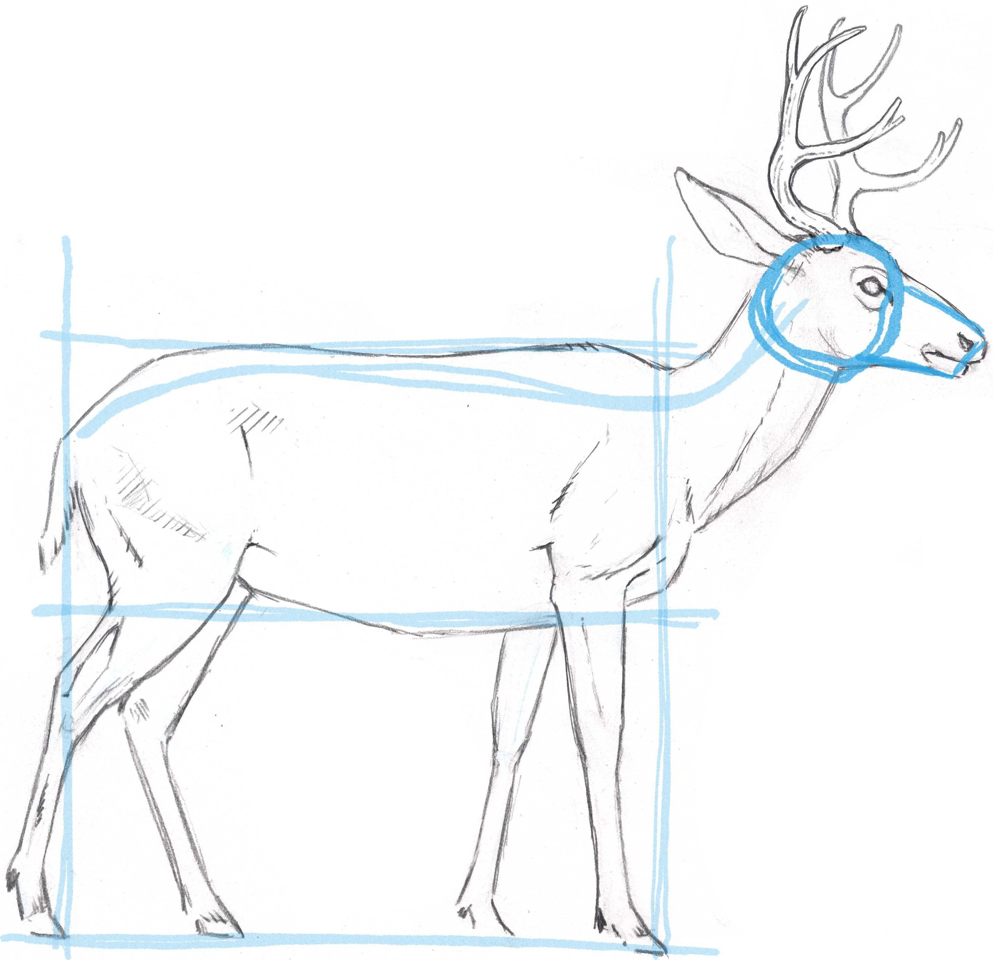 How To Draw A Deer Blocking In The Basic Shape Nature Drawing