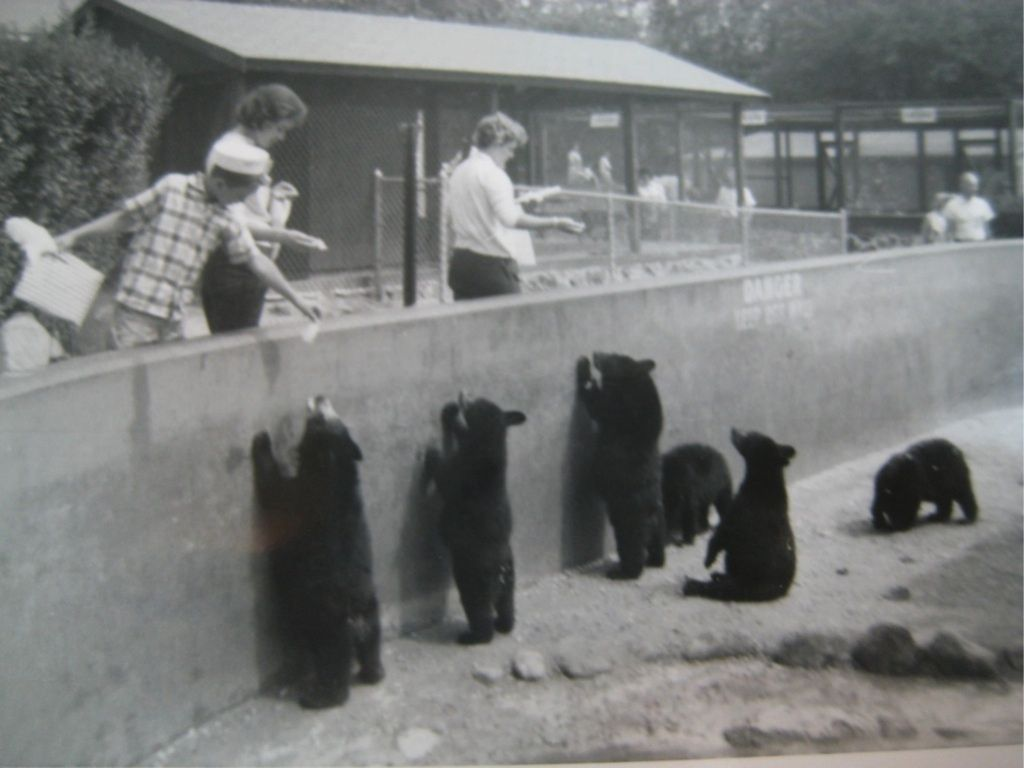 vintage snapshot benson nh new hampshire animal farm zoo feeding bear cubs 1950s ebay benson. Black Bedroom Furniture Sets. Home Design Ideas