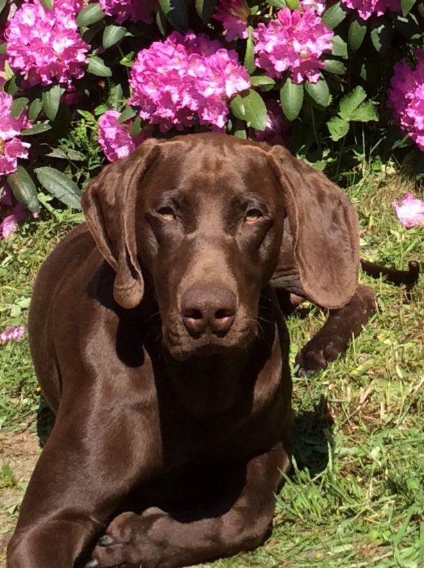 Tito-koira, jonka edesottamukset aina kiinnostavat asiakkaita. Tito on syönyt mm. silmälasit, puhelimen, lukuisat croksit, talvikengät, kesäkengät, kolmasosan joulukinkusta....vain muutamia mainitakseni.
