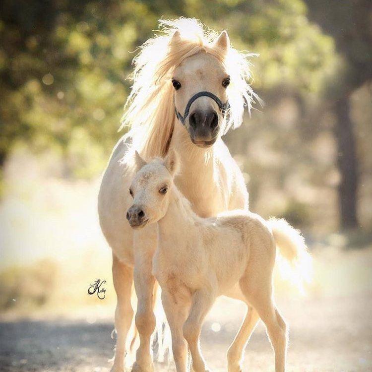 #instaphoto #equitation #fan #fanequitation #instapics #picoftheday #photographyoftheday  #instaphoto #equitation #fan #fanequitation #instapics #picoftheday #photographyoftheday #equitationhorse #horses #horse #horsejumping #horseshooting #equitationhorse #ridehorse #horseshoe #perce #photography #cool #fun #ass #cheval #chevalpassion #ride #nice