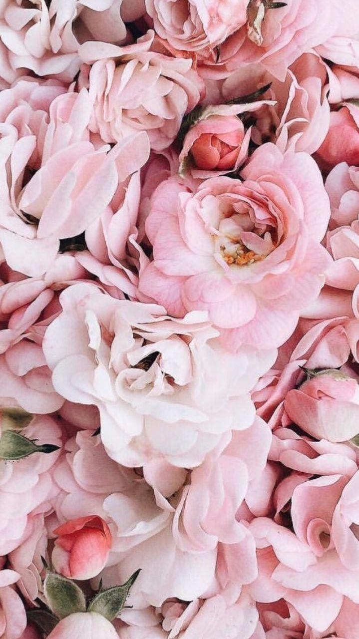 Blumen  floral  blten  Blumenstrau  Blumenstrau