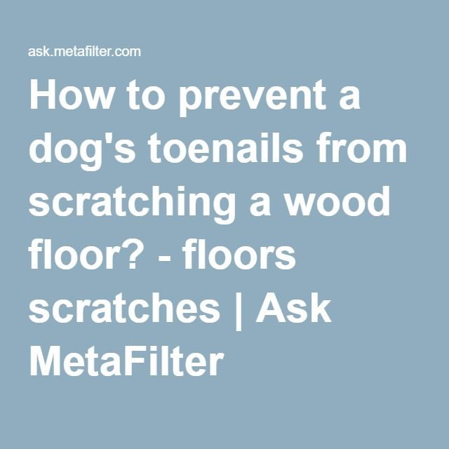 How To Prevent A Dogs Toenails From Scratching A Wood Floor