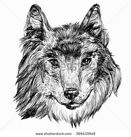 Hand drawn head of wolf. Vector illustration. Isolated image/ - stock vector
