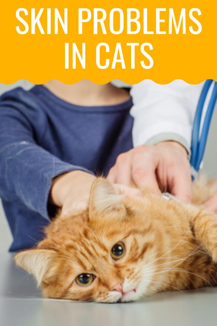 Cat health skin