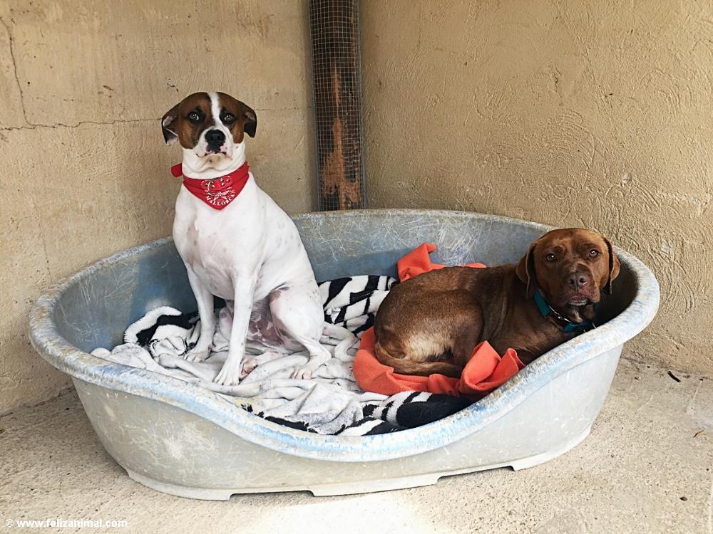 Yako Und Amy Feliz Animal Andratx Tierheim Hunde Und Katzen