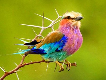 Colorful Bird - bird, picture, beautiful, colorful