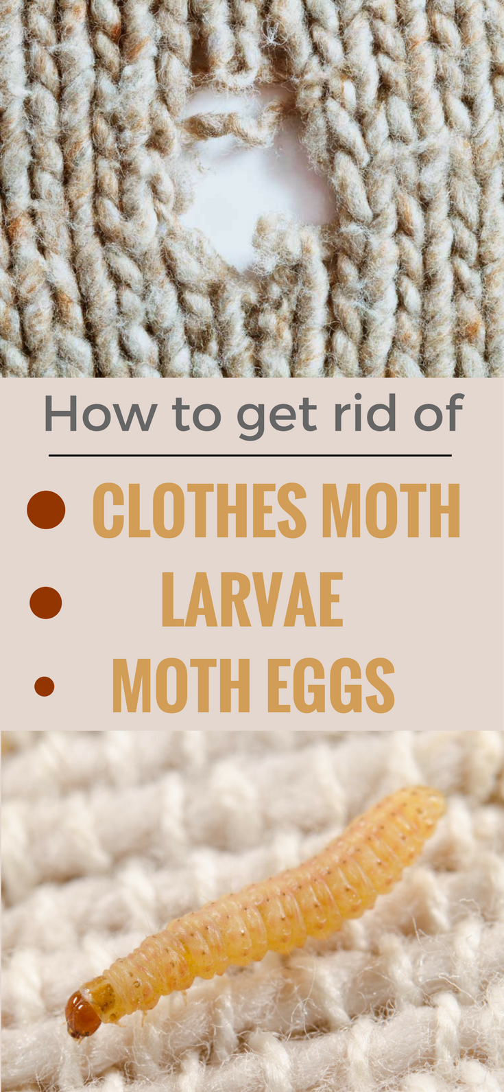 Best Methods To Get Rid Of Clothes Moth Larvae And Eggs