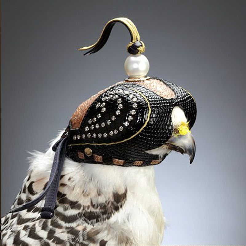 Pin By Hoang Tung On If It S Hip It S Here Falconry Falcon Hood Birds Of Prey