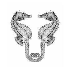 Risultati immagini per seahorse drawing