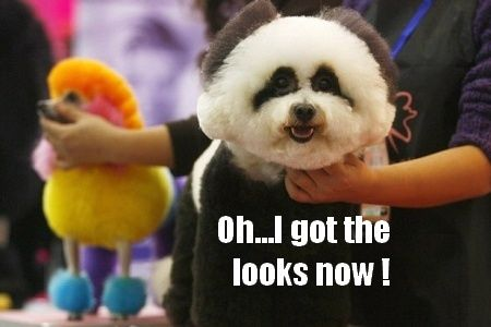 Funny Groomed Dog Kelly S Dog Grooming Styles Panda Dog Dogs