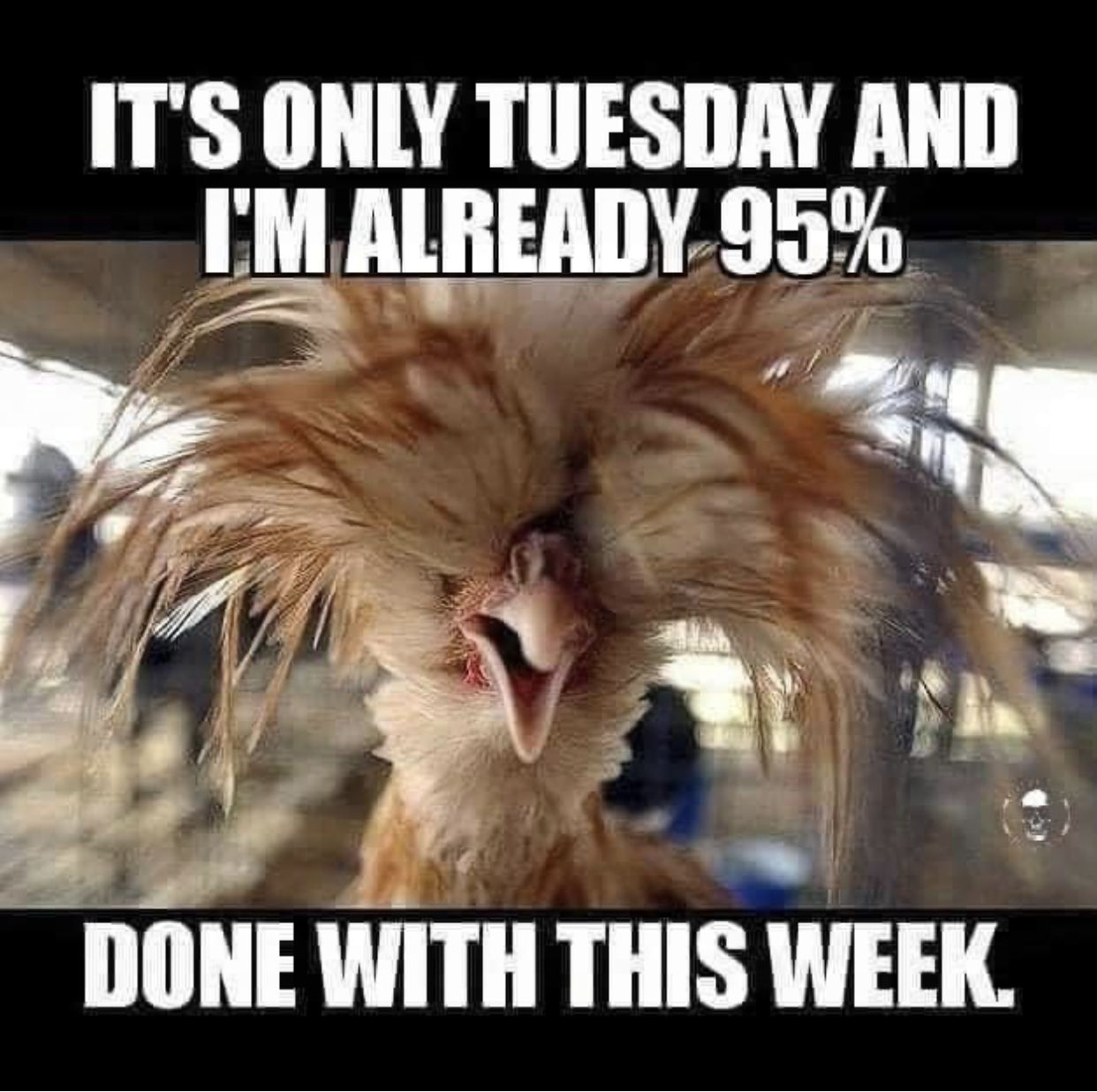 Pin By S Curry On School 2020 Happy Tuesday Quotes Tuesday Humor Its Only Tuesday
