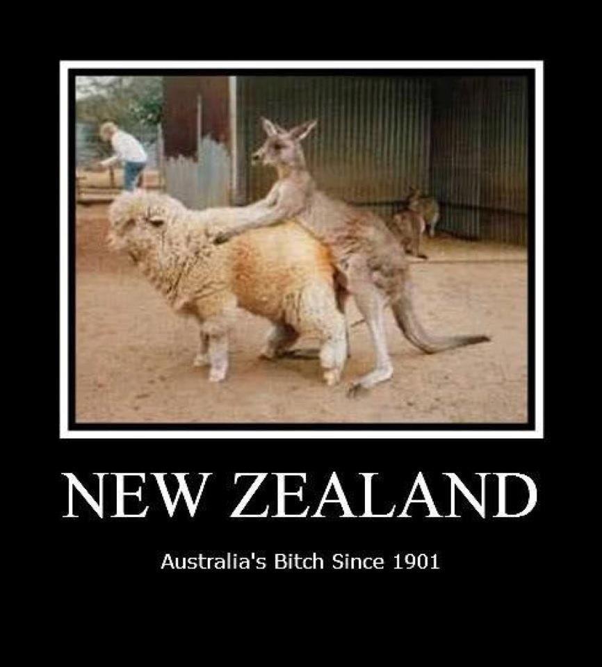 Pin By Renata Hartman On Memes Cute Cat Memes Cat Memes Funny Cat Memes