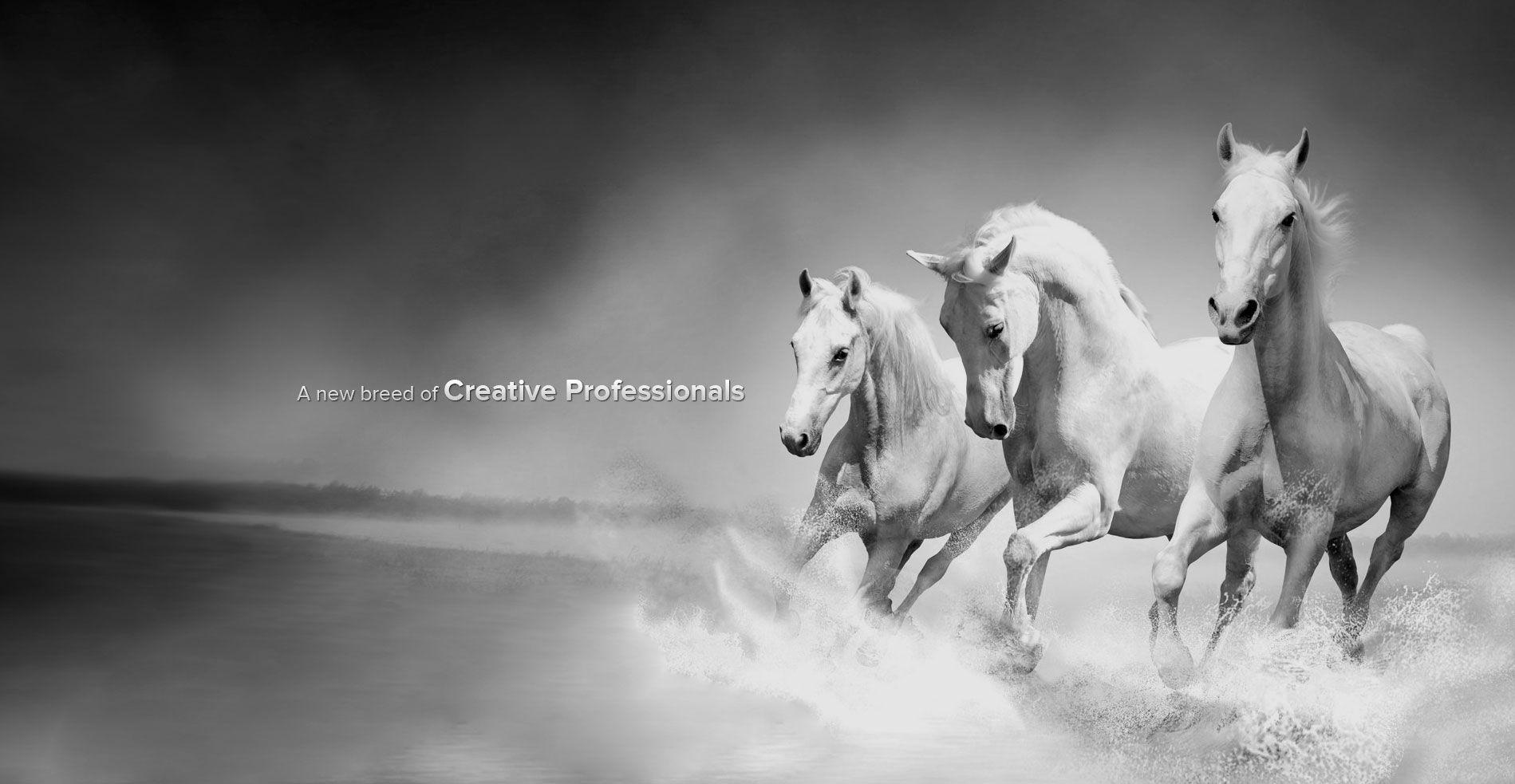 Wonderful Wallpaper Horse Creative - b7334cad10ce9bc9ae7f889b4286ef32  HD_913081.jpg