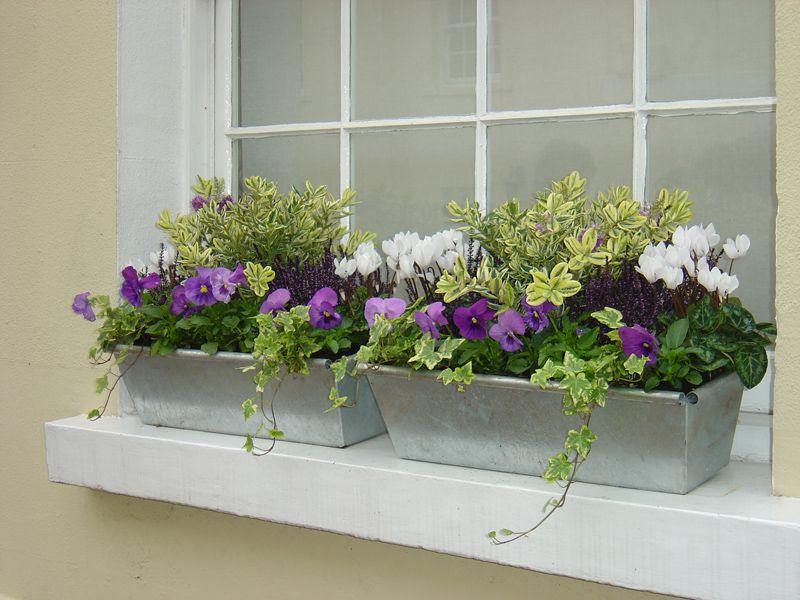 Window boxes containers os zen truhl k a n dob - Fioriere per davanzale finestra ...