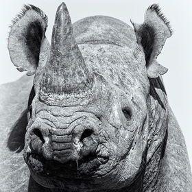 mr rhino (by Morkel Erasmus)