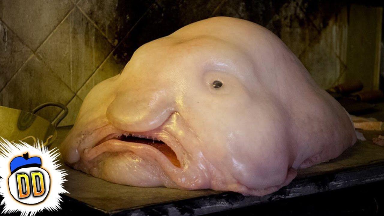 YouTube | Blobfish, Ocean creatures, Deep sea creatures