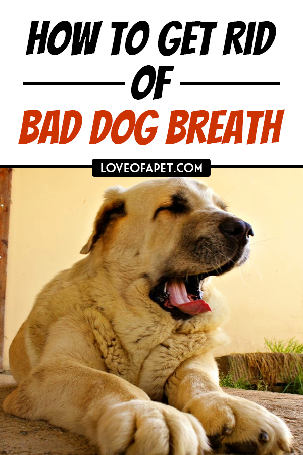 7 Ways To Freshen Your Dog S Breath Naturally Dog Breath Dog Breath Remedy Bad Dog Breath