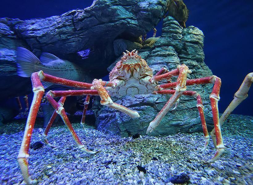 Alaskan King Crab | Photos | Pinterest | Alaskan king crab ...