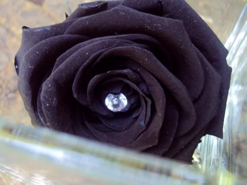 Vase Cube Rose Noire Diamants Fleur Naturelle Eternelle Stabilisee