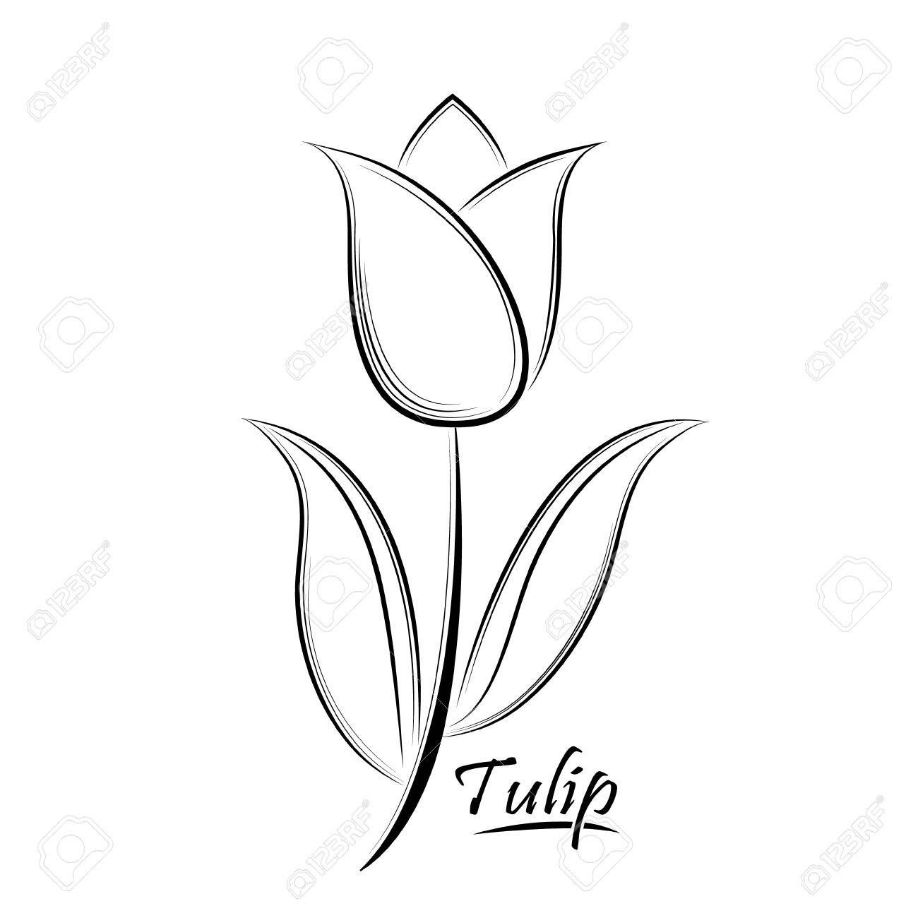 Vector Black Contour Of A Tulip Flower Isolated On A White Background 63663113 In 2021 White Background Images Clipart Black And White Banner Printing