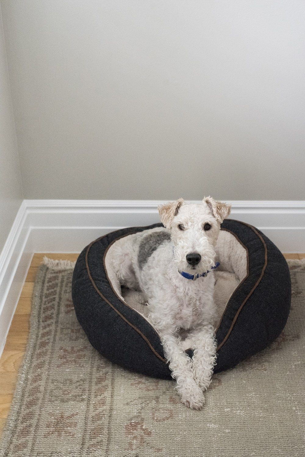Amazon Finds Dog Beds Room For Tuesday Blog Dog Toys Smart