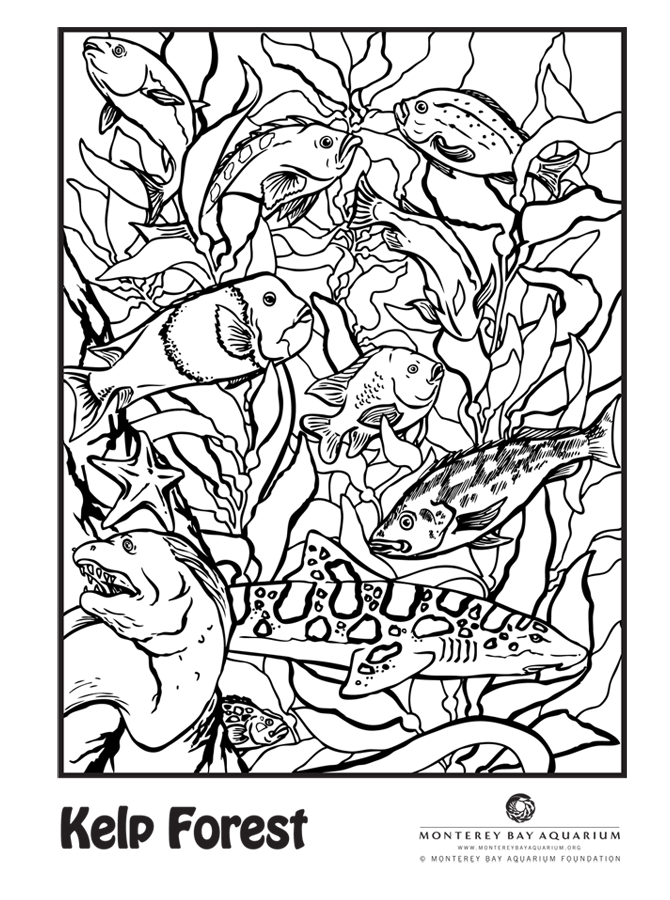 can you spot the leopard shark kelp forestcoloring bookcolouringtransitional