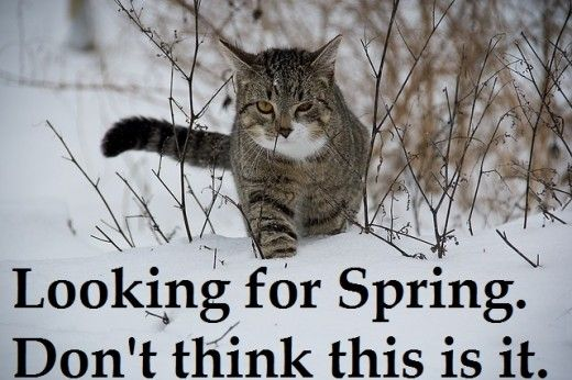Funny Memes For Snow : Funny cat memes and pictures about cat behavior snow meme funny