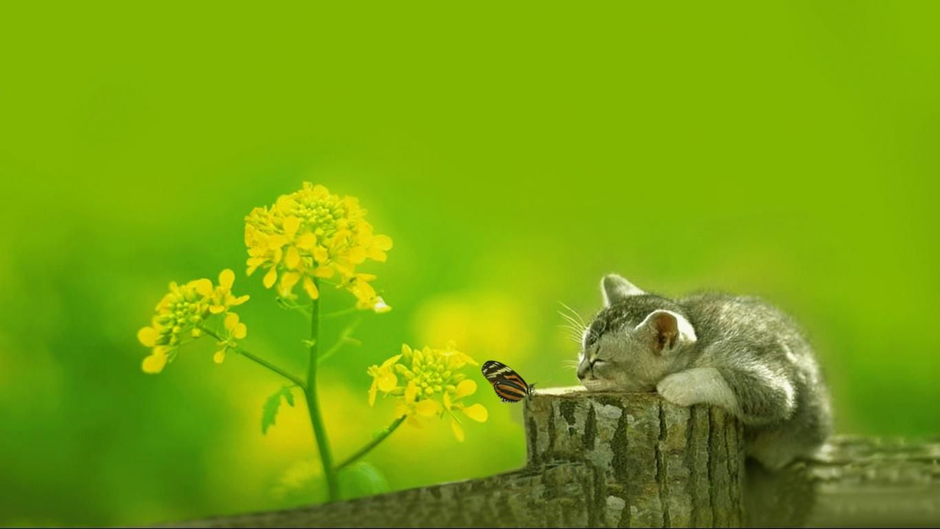Hd wallpaper wide - Cat Butterfly Top Reddit Wallpapers Pinterest Wallpaper Hd Wallpaper And Cat Wallpaper