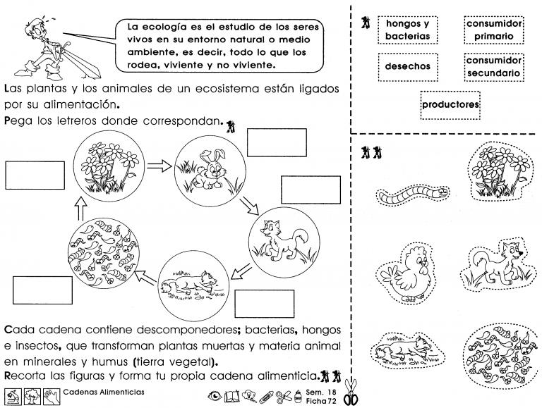 Cadenas Alimenticias La Ecología Es El Estudio De Los Seres Vivos En Su Entorno Natural O Me Science And Nature Interactive Notebooks Dual Immersion Classroom