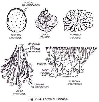 Lichens: Definition, Structure and Reproduction (With Diagram)
