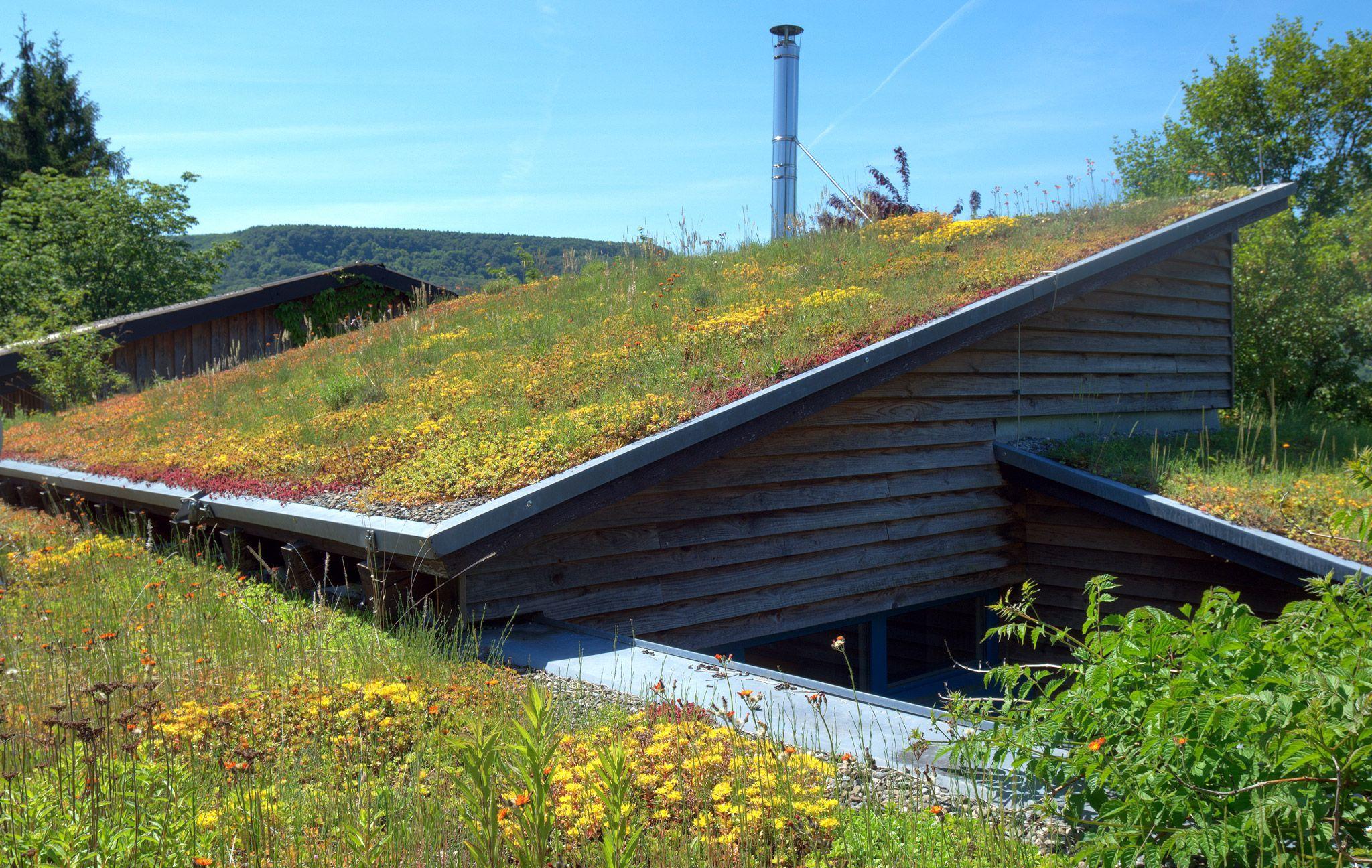 Dachbegrunung Die Wichtigsten Infos Das Haus Dachbegrunung Dachgarten Extensive Begrunung