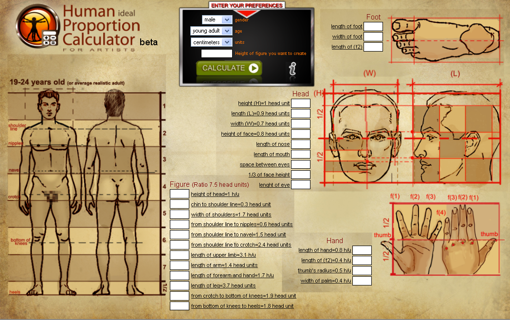 Young adult male proportions Http://hpc.anatomy4sculptors.com