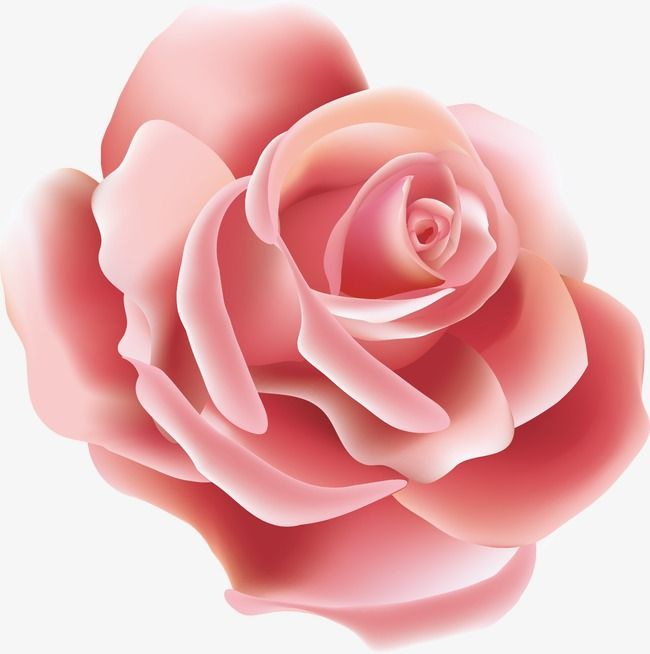 Vector Single Roses Png And Vector Wallpaper Nature Flowers Rose Flower Png Flower Phone Wallpaper
