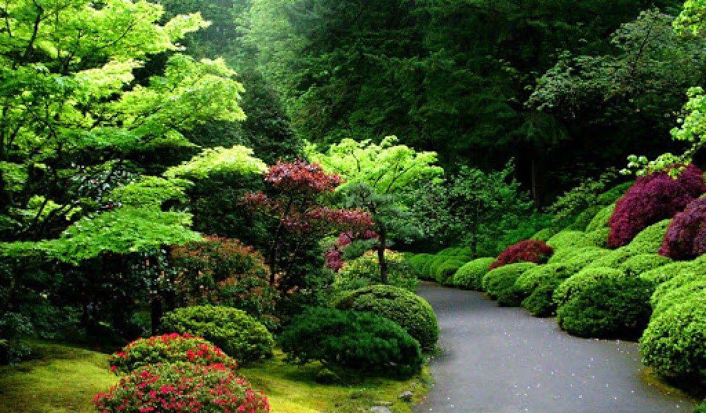 foto pemandangan hutan terindah di dunia Taman jepang
