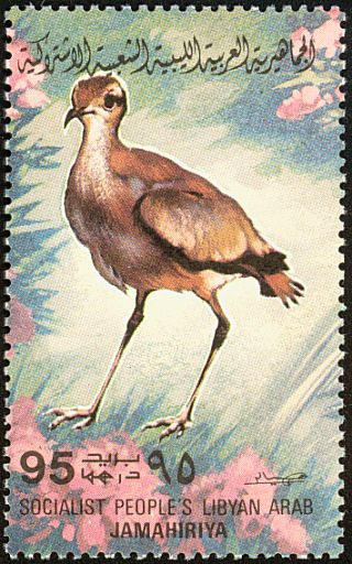 Cream-colored Courser stamps - mainly images - gallery format