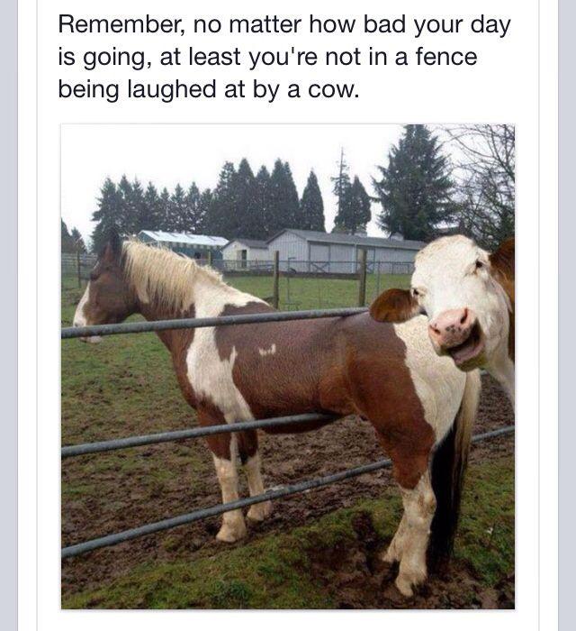 Cow  Love the cow photo bomb