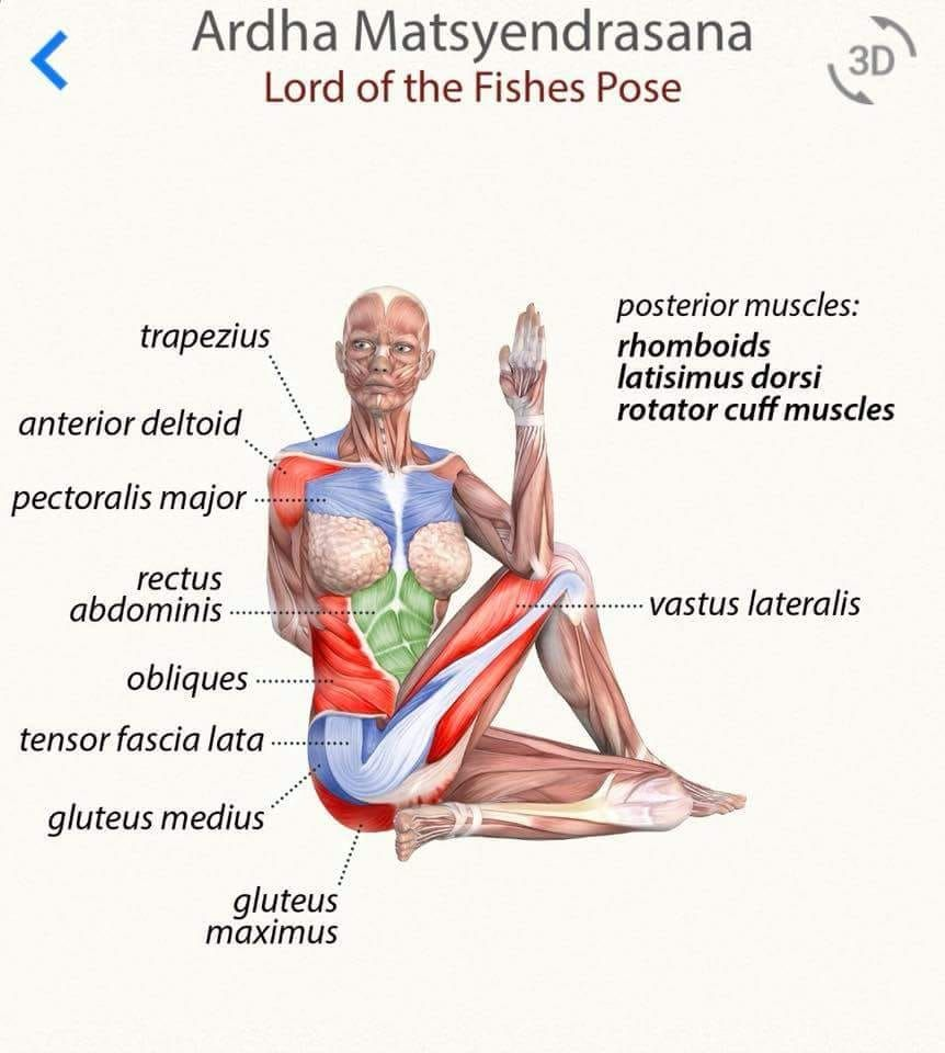 Ardha Matsyendrasana Yoga Anatomy Yoga Muscles Yoga Training