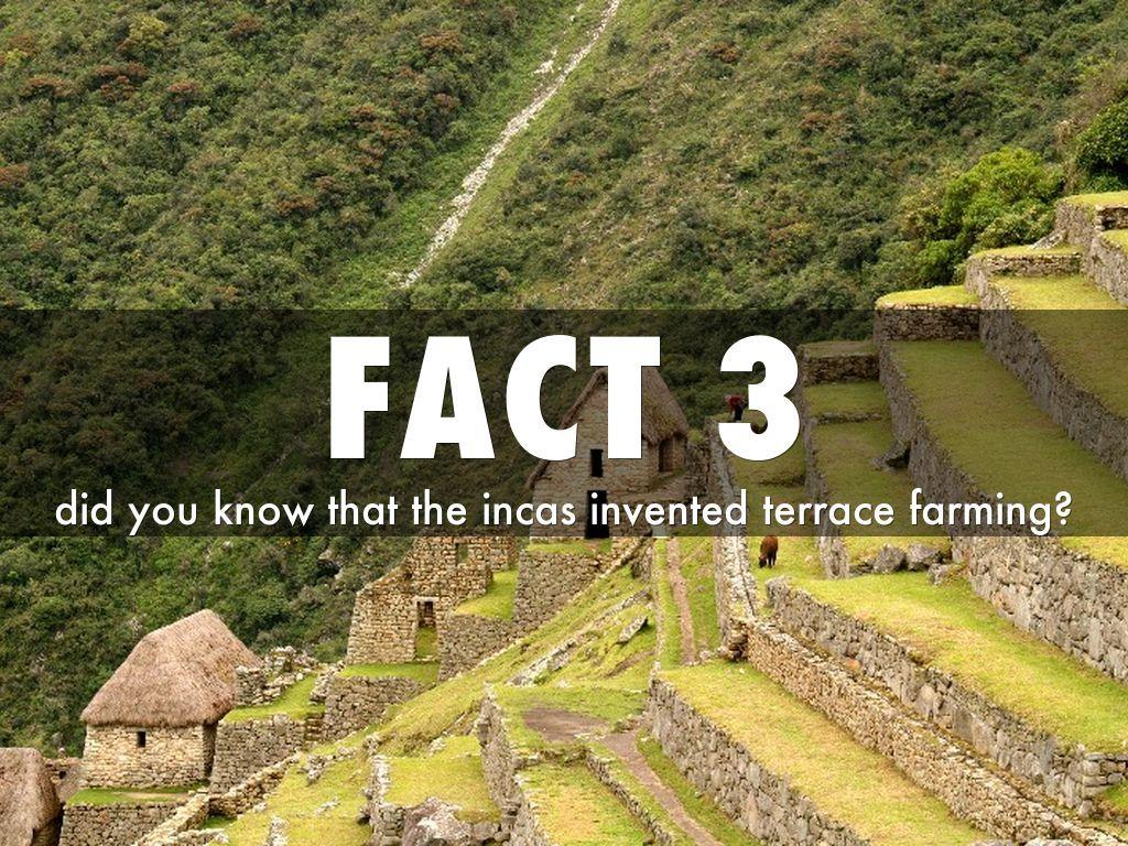b73aaec6af7516b8ef873318d2beda71 - Inca Terrace Farming And Aztec Floating Gardens
