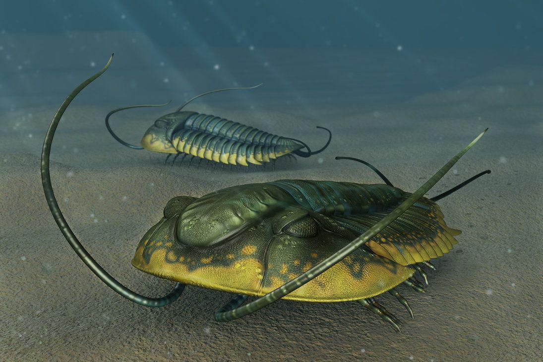 Ehmania species http://onikaizer.deviantart.com/art/Trilobites-Ehmania-sp-330850119