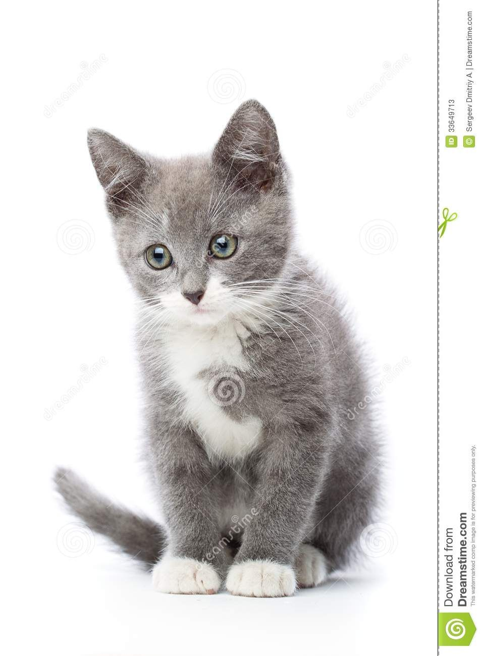 Cats In Care The Ultimate Cat Care Guide Cats In Care Grey And White Kitten White Kittens Grey Kitten