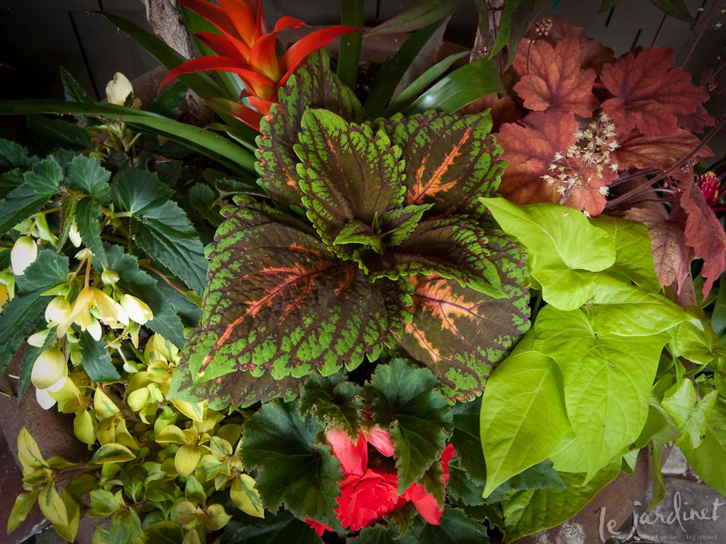 Plantings Of Coleus Begonias And Coral Bells Show How