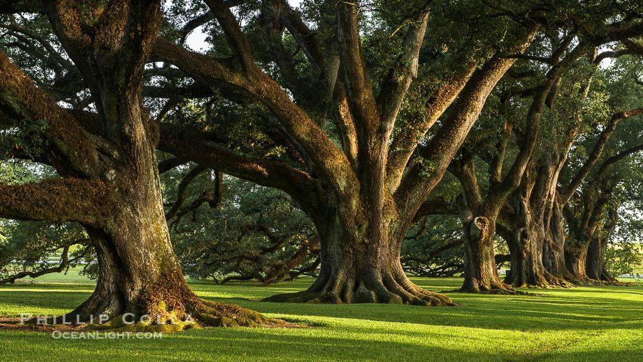 Live Oak Park is the City's largest park with 16 acres of