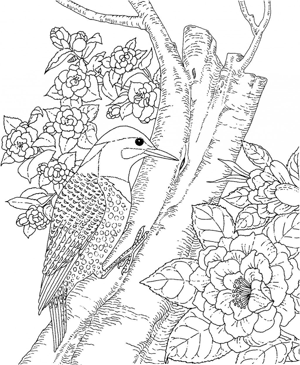 Backyard Animals And Nature Coloring Books Free Coloring Pages Animal Coloring Pages Bird Coloring Pages Coloring Pages Nature