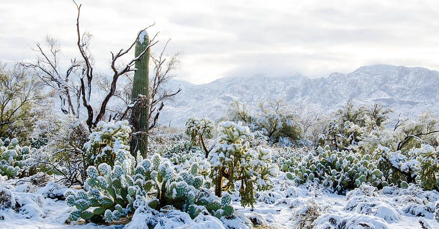 Op This What It Looks Like When It Snows Where I Live In The Sonoran Desert Which Is Pretty Much All The Sout Sonoran Desert Desert Snow Wonders Of The World
