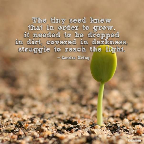 Growth Quotes Seeds About And