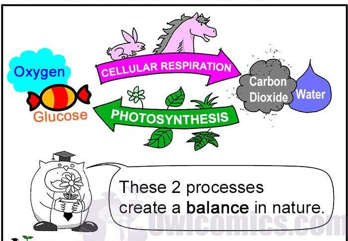 Cellular Respiration And Fermentation Worksheet Answers   Free also cellular respiration flow chart answers – joyofmusic info moreover Photosynthesis and Cellular Respiration  An Introduction as well holes worksheets printables – panyasan info as well paring   Contrasting Photosynthesis   Cellular Respiration besides photosynthesis and respiration  summaries and  parison by additionally paring photosynthesis and cellular respiration worksheet as well paring photosynthesis and cellular respiration worksheet Idea of in addition  besides  additionally Photosynthesis respiration worksheet  2160258   Worksheets liry additionally essay on photosynthesis essay on plant metabolism words essay likewise paring Photosynthesis And Cellular Respiration Worksheet Answer further Cell Energy Flow Chart Worksheet Answers Photosynthesis And also Photosynthesis and the Teeny Tiny Pigment Pancakes   YouTube in addition Inspirational Crosswordzzle Synthesis and Respiration Answers. on comparing photosynthesis and respiration worksheet