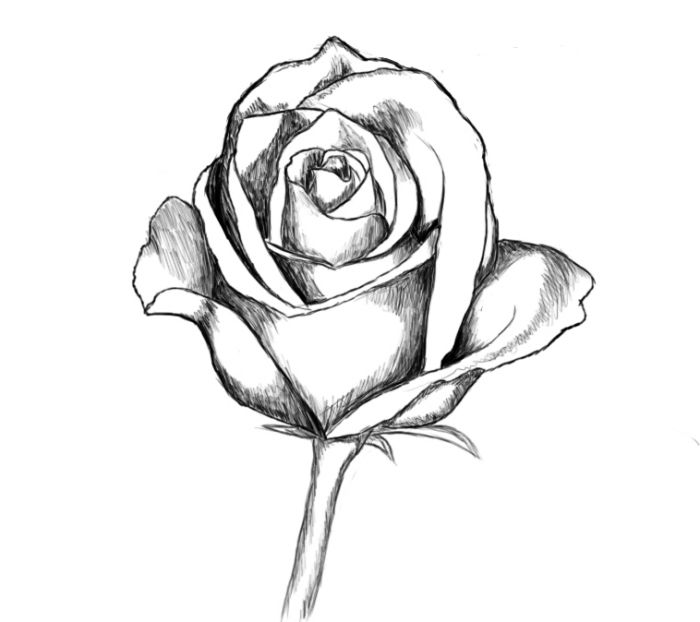 1001 mod les et conseils pour apprendre comment dessiner une rose art comment dessiner une - Dessin facile rose ...